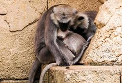 Landfrauen Wittingen - zu Besuch im Zoo Hannover